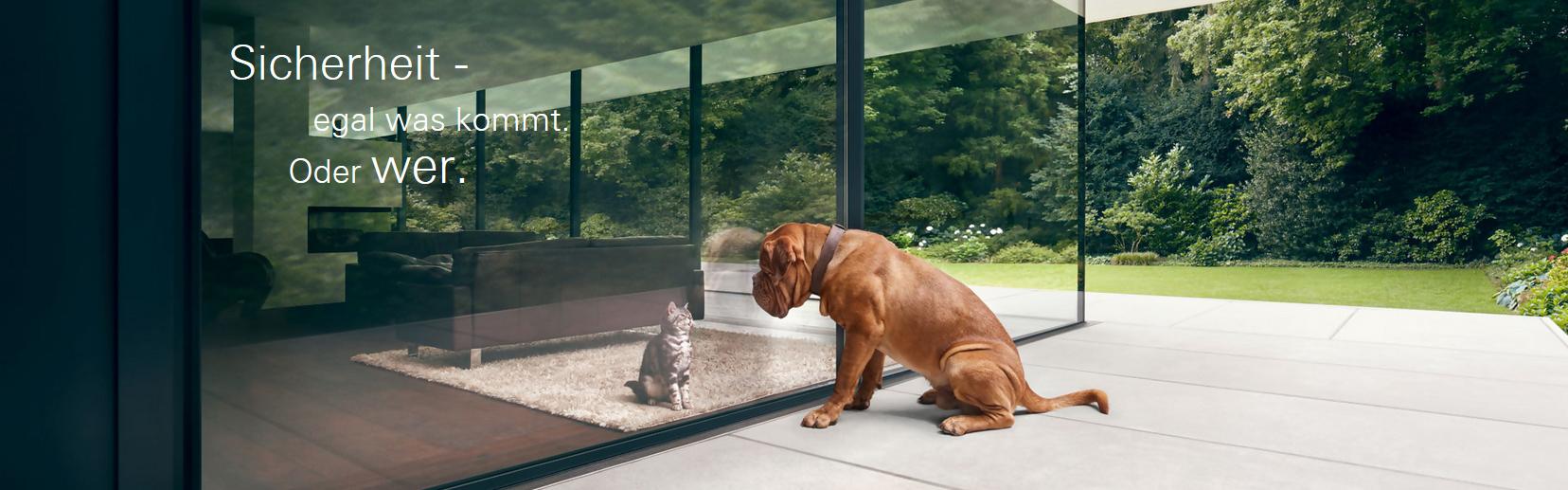 Ein Hund sitzt vor einem großen Glasfenster